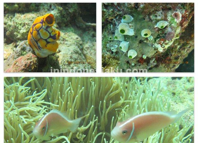 Wisata Manado, Laut Bunaken 2