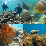 Wisata Manado, Menyelami Istana Dewa Bawah Laut Bunaken