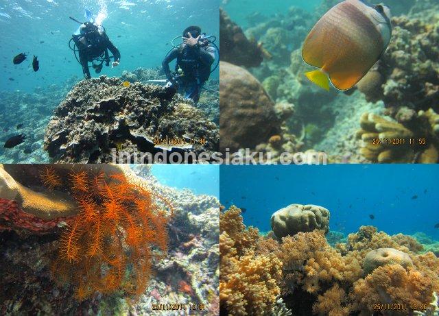 Wisata Manado, Laut Bunaken 3