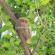 Tarsius, Si Monyet Mini Kebanggaan Cagar Alam Tangkoko Manado