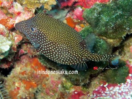 Wakatobi, Sulawesi Tenggara 5