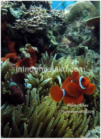 Bentang Alam / Halmahera (Part 1), Teater Hewan Macro di Laut Ternate