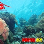 Jejak IDC Oktober 2014, Wisata Taman Nasional Wakatobi (OPEN)