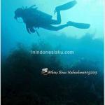 "Halmahera (Part 2), Pulau Kahatola ""The Coral Garden"""