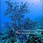 Pulau Komodo (Part 1), Keelokan Habitat Alami si Kadal Purba