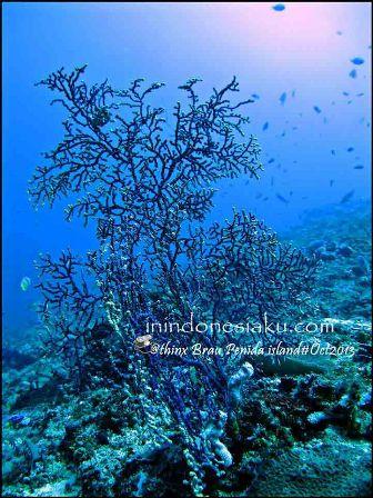 Pulau Komodo 13