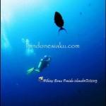 Pulau Komodo (Last Part), Dive Trip Tanpa Ampun