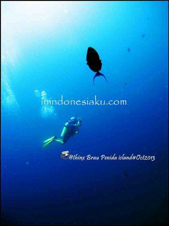 Pulau Komodo 14