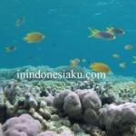 Lembata: Menguntai Senyum di Spot Snorkeling Laut Lembata