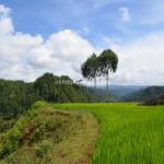 Desa Dende Piongan Napo – Tana Toraja, Membuatku Ingin Selalu Kembali Bertemu