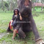 Taman Nasional Way Kambas – Lampung