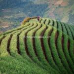 Wisata Majalengka, Menikmati Indahnya Lembah Panyaweuyan Argapura di Pagi Hari