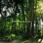 Mata Lensa, Taman Hutan Raya Ir. H. Djuanda