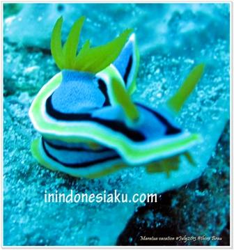 Indahan Dasar Laut Derawan2