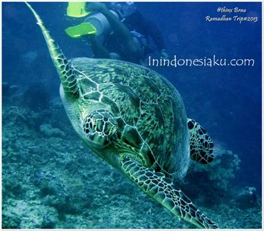 Indahnya Dasar Laut Derawan17