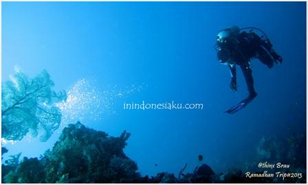 Indahnya Dasar Laut Derawan9