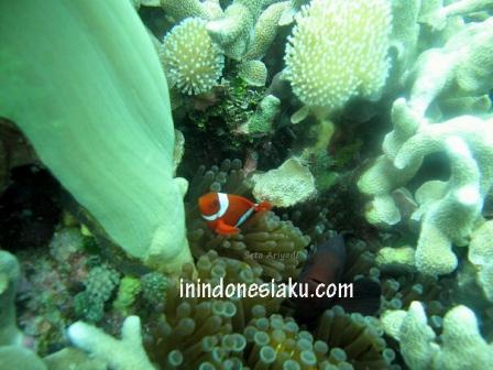 Wakatobi, Sulawesi Tenggara 7