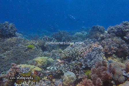 Pulau Tinabo, Takabonerate Makassar 2