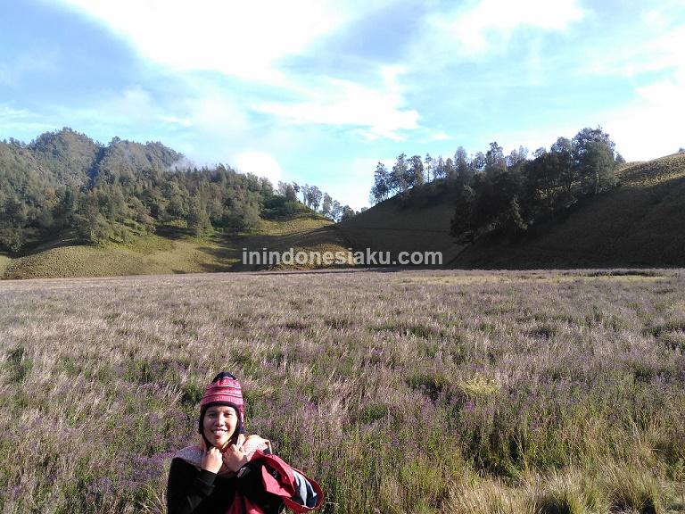 Menikmati Oro Oro Ombo Gunung Semeru In Indonesiaku